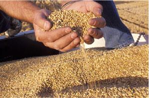 grain services